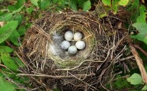 bird-nest-removal-large