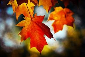 Flickr-leaves-Edward.rhys_-300x200